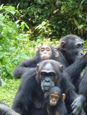 8 days and 7 nights wildlife and gorilla trekking Holiday safari