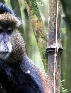 8 Days Rwanda Wildlife And Cultural Tour