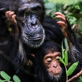 12 Days Gorilla safari tour