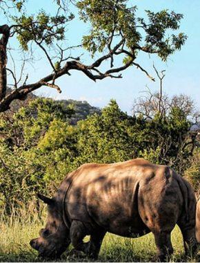 10 Days Best Of Uganda Adventure Tour Holiday