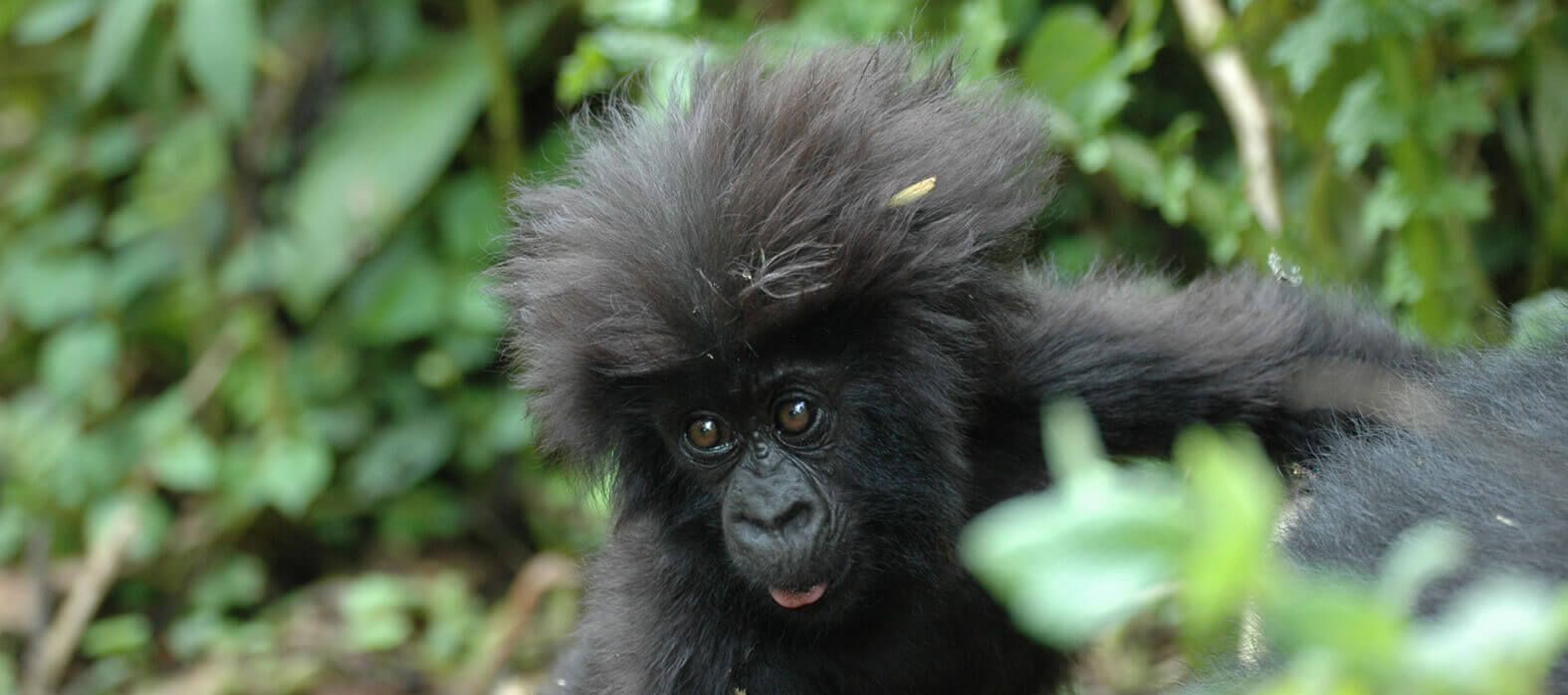 Aga Safaris is the best African wildlife Safari and gorilla trekking specialist in planning Luxury tours, adventure travels and gorilla tracking trips of a lifetime for over years! Our Expert Travel Consultants offer exceptional levels of friendly service